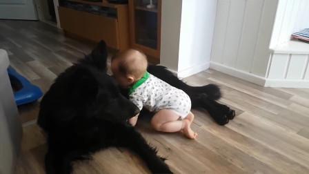 宝宝和狗一起的时候 汪星人也太温柔了 一点也不生气