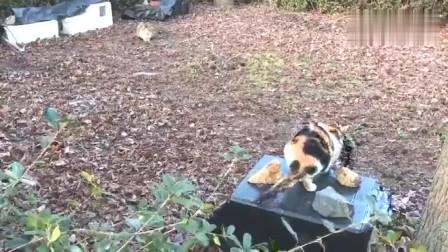 给流浪猫做的泡沫塑料小窝,方便搬运还能遮风挡雨,喵住的好开心-