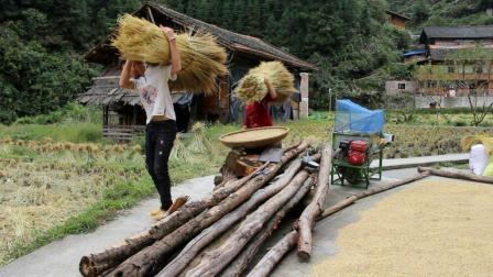 农村爸妈打的这种糯米, 做糍粑特好吃, 连稻草都可以卖到五六块钱
