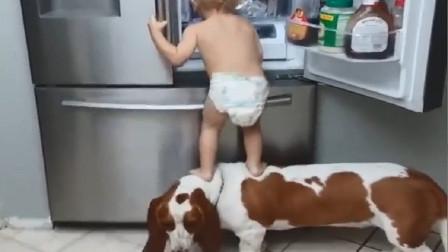 宝宝和狗狗配合偷东西,女主人突然过来了,狗狗的表现让人大笑!