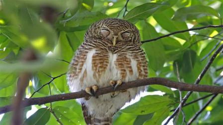 小鸟经常站在树枝上睡觉,为什么它们不会掉下来?