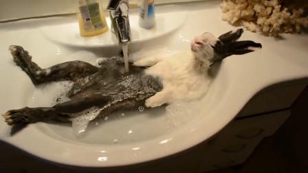 主人给兔子洗澡,中途接个电话,回来就看到这样的一幕!