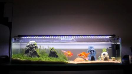 【DIY】从零开始制作海绵宝宝的比奇堡海洋水族箱!