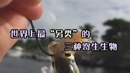 能控制蚂蚁大脑,使蚂蚁身体僵硬,纹丝不动?这生物可不简单!