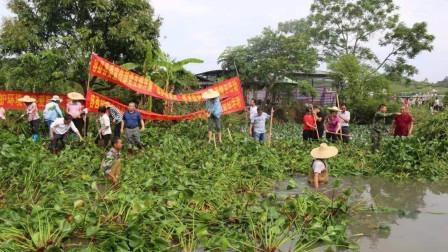 国人的智慧:曾入侵中国的水葫芦现在都消失了,去哪了呢?