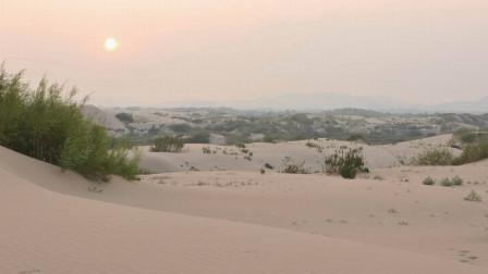 """干旱了400年的沙漠,竟开出一片""""花海"""",都是因为这场雨"""