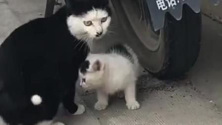没有刘海的猫妈妈,生了一个有刘海的猫崽崽,太有爱了