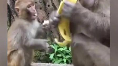 小猴子:我想吃!大猴子:不,你不想吃