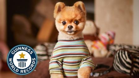9只创下了吉尼斯世界纪录的宠物