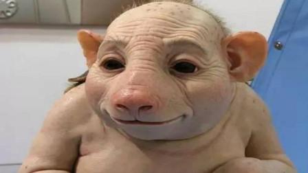 母豬無故失蹤,一月后懷著孕回來,產下豬崽那一刻老農傻眼了!