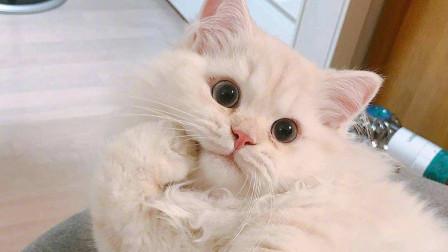 一网友每天出门前都要吸吸猫,但猫好像并不怎么开心…