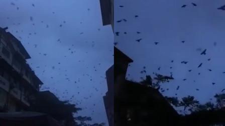 网传长宁震区大量燕子飞舞 地震局:属实,飞行动物可能是蝙蝠
