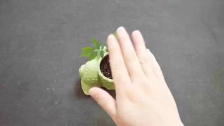 生根剂不用买,水里加上一个小东西,生根快又多,插个枝就能活