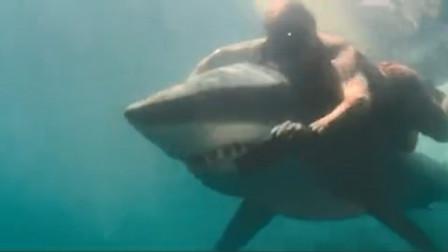 男子淡定与鲨鱼同游,巨口尖牙中取车牌,这也太大胆了吧