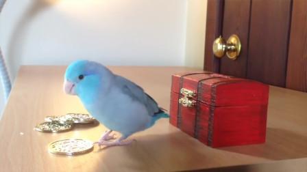 给一粒米,就可以帮你存一块钱,这只鹦鹉好聪明