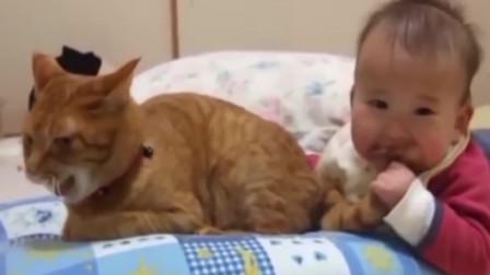 猫咪尾巴被宝宝一口咬住, 猫咪顿时发怒, 接下来的画面让人感动!