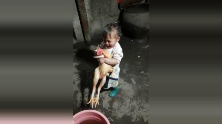 闺女看到自己养的鸡马上就要做成菜,抱着鸡哭了起来