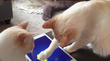 两只猫在一起玩捕鱼游戏,嫌同伙太笨,直接给了一爪子