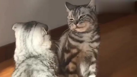 小猫:不是我看不起你,是我真的练过