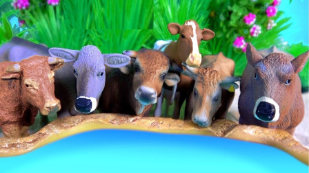 来到农场认识奶牛绵羊小动物们