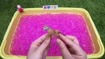 派大星好想拥有粉色球球盆里的小老虎玩具