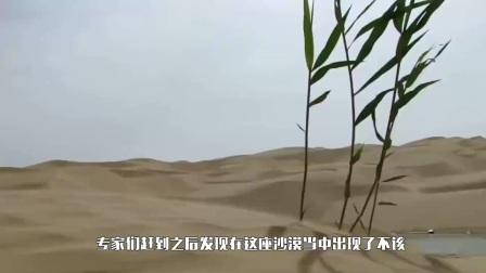 中国沙漠出大事了!36位专家连夜前往,发现不该出现地球的东西