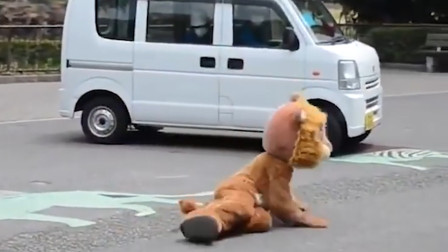 """动物园举办防狮子逃脱演习 真狮全程看呆:""""他们在嘲笑我们吗"""""""