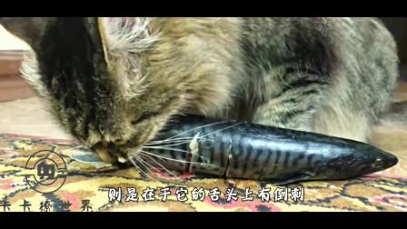 为何猫咪吃鱼从来不怕卡刺?镜头放慢100倍后,看完解开多年疑惑