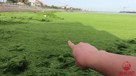 暑期想去哪玩?来这里赶海吧,一半海一半草原还有蓝天白云美呆了