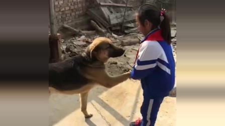小萝莉两年没回老家了,没想到家里的狗还记得她,太有爱了!