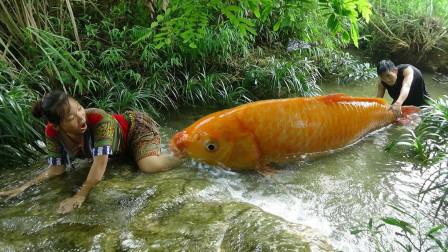 农村大嫂户外抓到黄金大鲤鱼,这种鱼拿来烤着吃简直太奢侈了