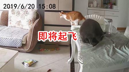 为防止猫咪拆家,主人装上了监控,结果看到视频画面笑出鹅叫