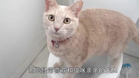 橘貓上完廁所,竟一頭扎了進去,主人:這是想嘗嘗自己的味道嗎