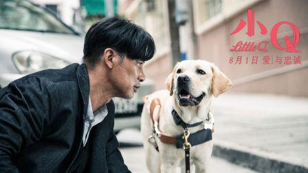 《小Q》导盲犬养成记 见证人类最忠诚有爱的伙伴
