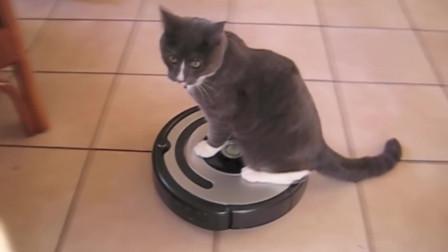 你给我下来,这是扫地机器人,不是让你在上面坐着玩的