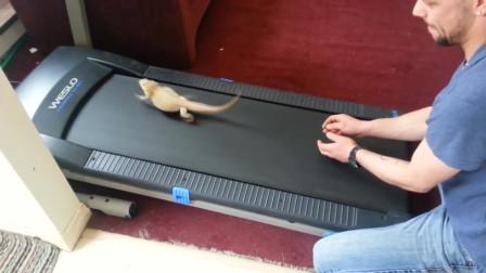 把蜥蜴放在跑步机上练习跑步,你这个脑洞大的也是可以