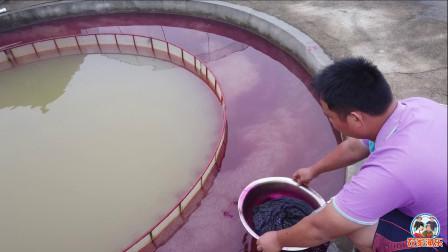 鱼场换上新设备后,海哥进行下一步工作,给鱼蛋洗个消毒澡