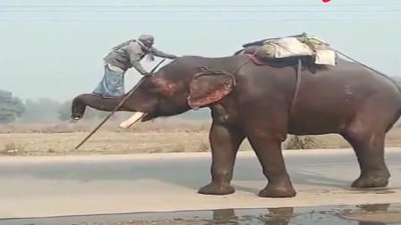 你这大象是祖传的吗这也太配合了吧