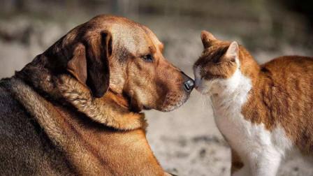 """农村俗语""""一家不上七口,猫狗不能养全"""",其中的道理你知道吗?"""