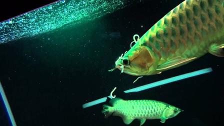 蚯蚓根本不生活在水里,为何还要用它当鱼饵,看完后解开多年疑惑