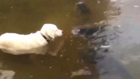狗:说出来你可能不信,是鱼先动的手