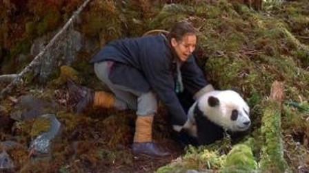 """那个偷走""""大熊猫""""的美国人,把大熊猫卖了8750美金,现在怎么样了?"""