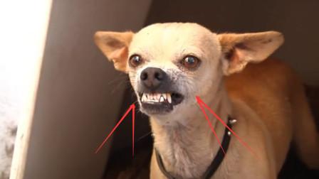 为何老人说:舔过人血的狗,必须当场杀掉,不杀会有什么后果?