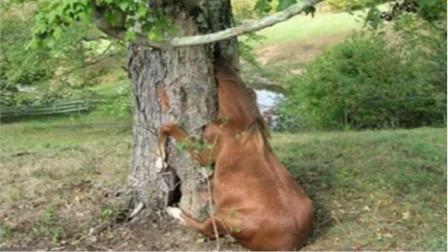 """世界上最""""下流""""的一棵树,4000年来食女人无数,专家都无法解释!"""