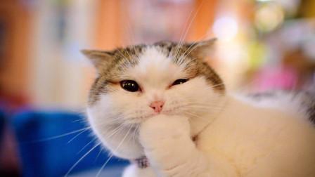 【每日一囧合辑】主人为了训猫以身作则…哈哈哈养猫把人折腾成这样