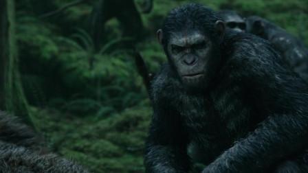 猩球崛起2:猩猩们狩猎而归,它们不仅会骑马,甚至还建立了自己的部落