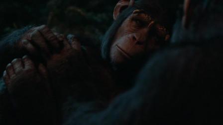 猩球崛起2:猩猩王晚上搂着老婆和孩子睡觉,这才叫温馨