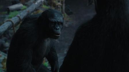 猩球崛起2:黎明之战:科巴曾被人类关在实验室里折磨,凯撒解救了猩猩们!