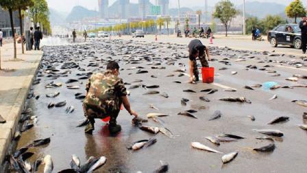 天上突然掉下来许多条鱼,吓坏了当地的居民