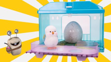 萌宠玩具 智能孵化小鸡过家家